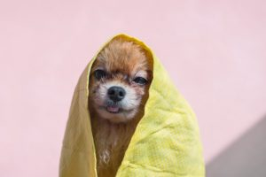 best shampoo for smelly dog